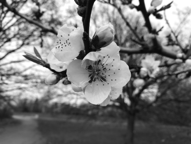 honor 8 pro Камера черно-белая