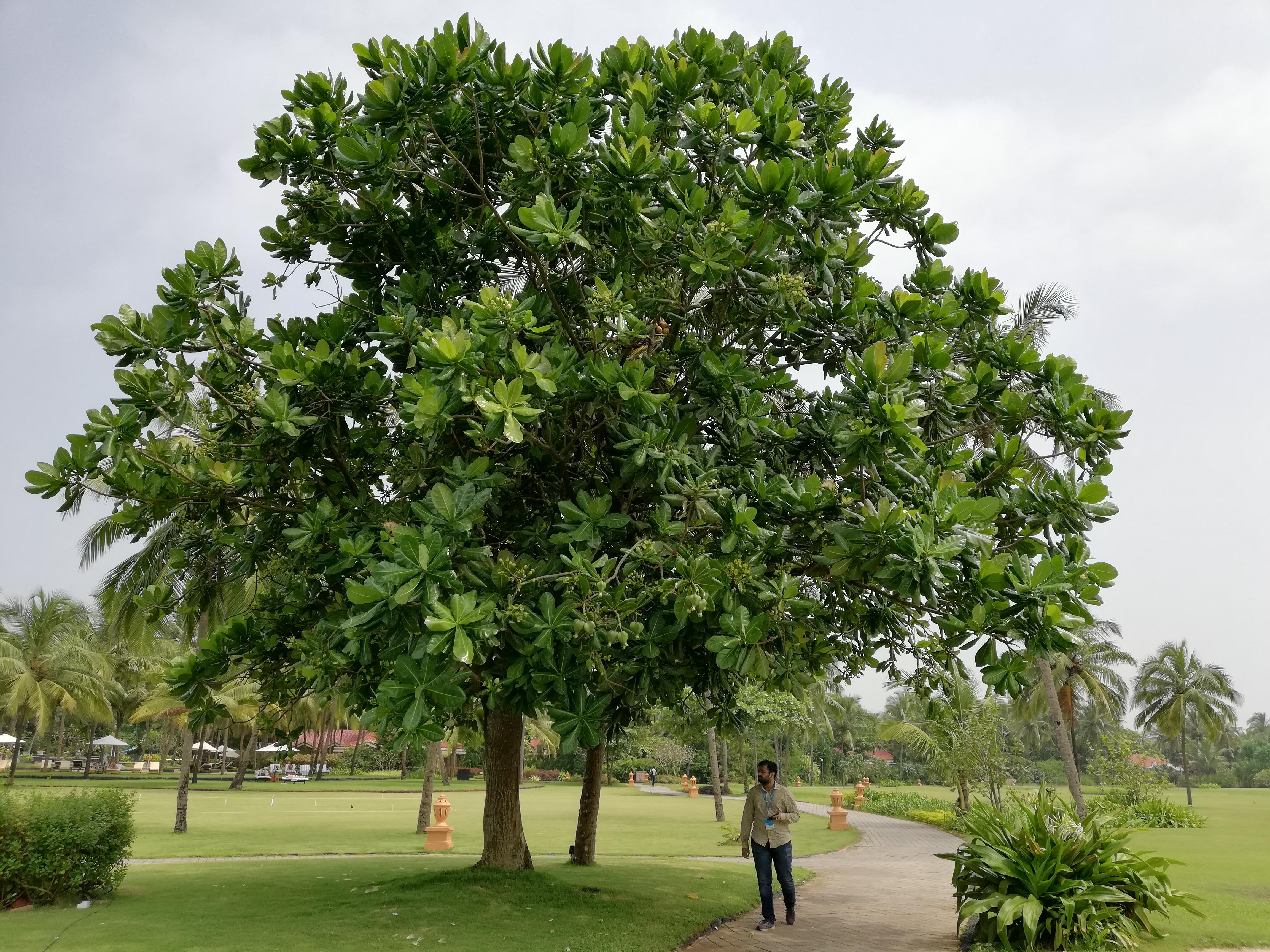 huawei mate 10 lite пример фото